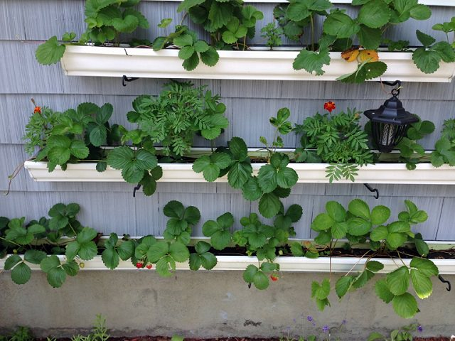 7 Crazy Ideas To Grow Strawberries In A Little Space