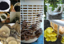How to Grow Delicious Mushrooms at Home