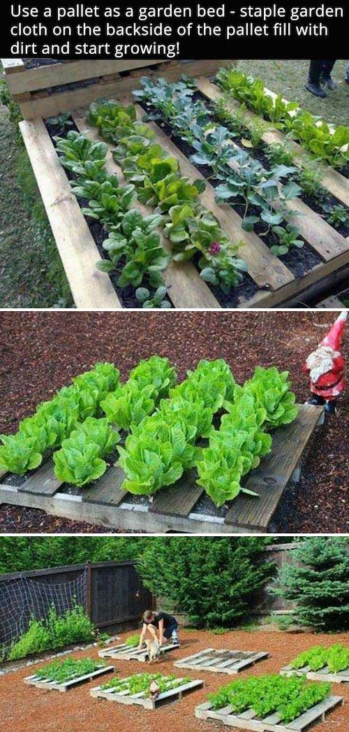 The Secrets To Growing A Vegetable Garden In Small Space Lazytries