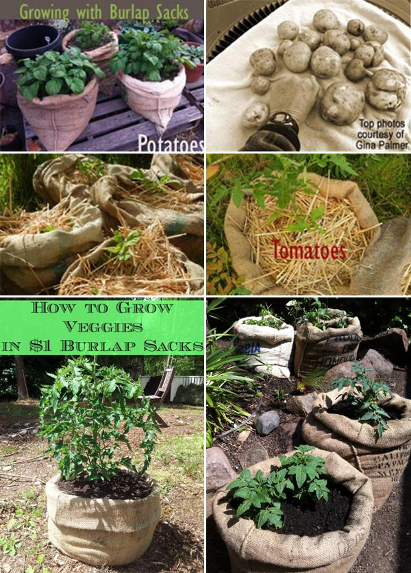 Gardening Tips Using Burlap