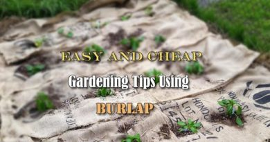 Easy and Cheap Gardening Tips Using Burlap