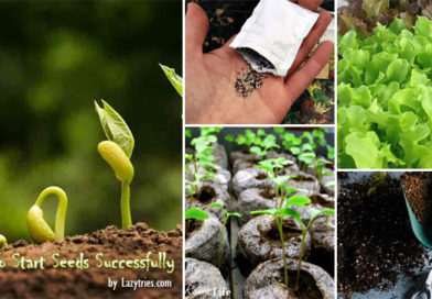 Step-by-Step Guide How To Raise Seeds Successfully