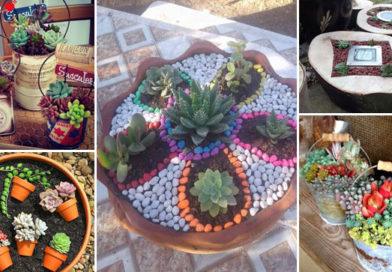 Brighten Your Space With Colourful Succulent Gardens